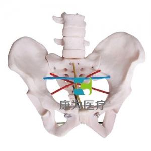 """""""康为医疗""""骨盆测量示教模型,女性骨盆测量操作模型"""