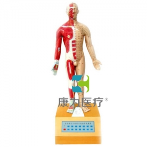 """""""康为医疗""""语音提示十四经穴针灸电动模型"""