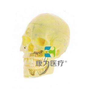 """""""康为医疗""""头颅模型"""