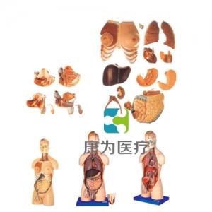 """""""康为医疗""""男性、女性外两性互换人体头颈躯干模型"""