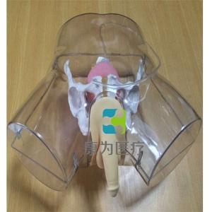 """""""康为医疗""""高级透明男性导尿模型"""
