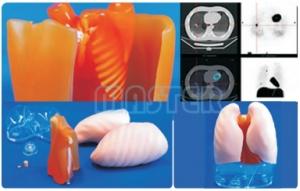 肥胖胸部模型,产品编号:PH-1B