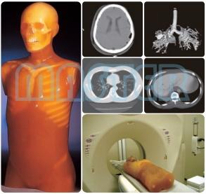 半身 CT躯干 模型,产品编号:PH-4