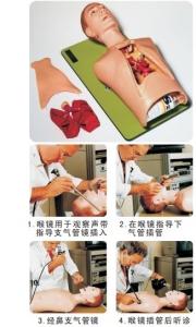 支气管镜和麻醉训练模型CLA9/7