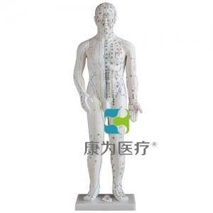 """""""康为医疗""""人体针灸模型50CM"""
