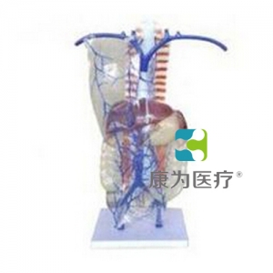 """""""康为医疗""""门静脉及侧支循环模型"""