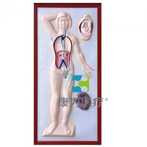 """""""康为医疗""""淋巴系统浮雕模型"""