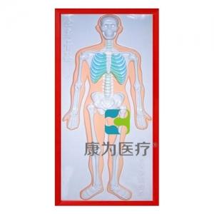"""""""康为医疗""""骨骼系统浮雕模型"""