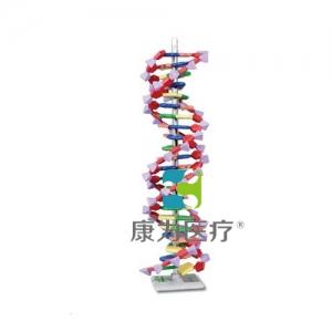 """""""康为医疗""""DNA结构模型"""