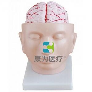 """""""康为医疗""""头部附脑动脉模型"""
