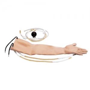 德国3B Scientific®皮肤带有3段动脉