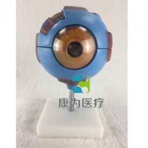 """""""康为医疗""""眼球放大模型"""
