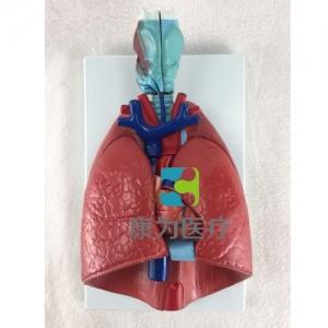 """""""康为医疗""""喉、心、肺模型"""