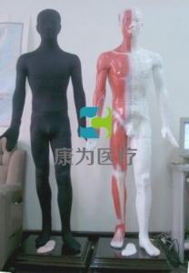 """""""康为医疗""""MMAW-170A蒙医光电感应多媒体按摩点穴电子人体模型(蒙古族医术)"""