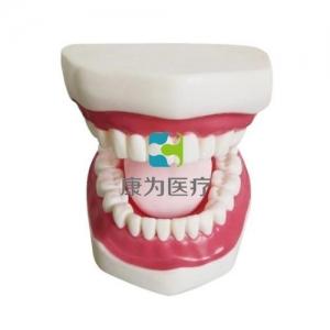 """""""康为医疗""""口腔护理保健模型(带舌)"""