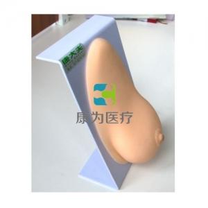 """""""康为医疗""""女性乳房模型(假乳模型)"""